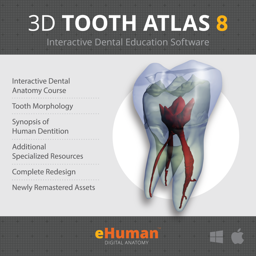 eHuman Digital Anatomy Releases 3D Tooth Atlas version 8