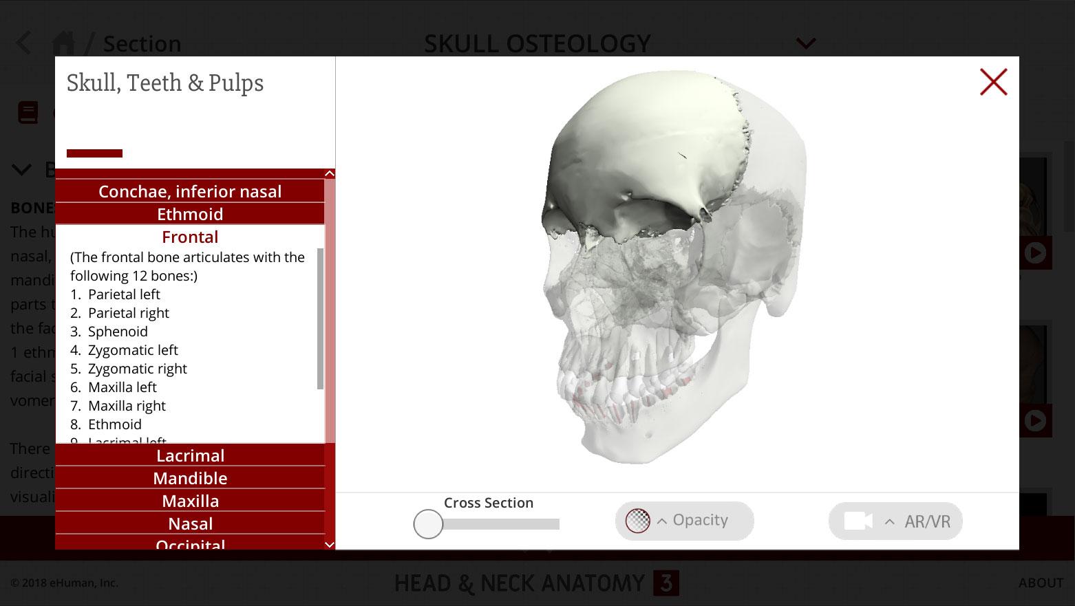 Head and Neck Anatomy 3 | eHuman