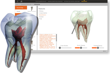 3D Tooth Atlas