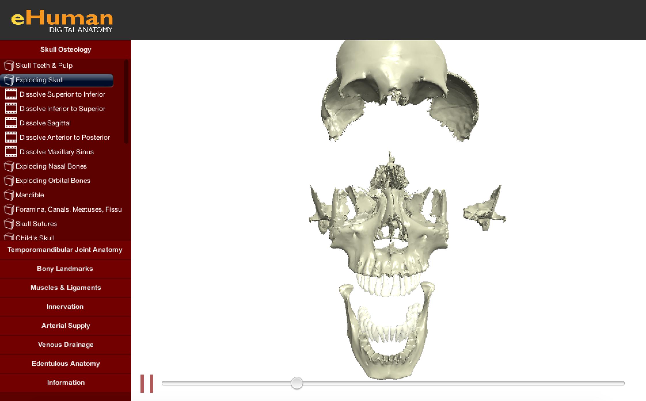 Head and Neck Anatomy | eHuman