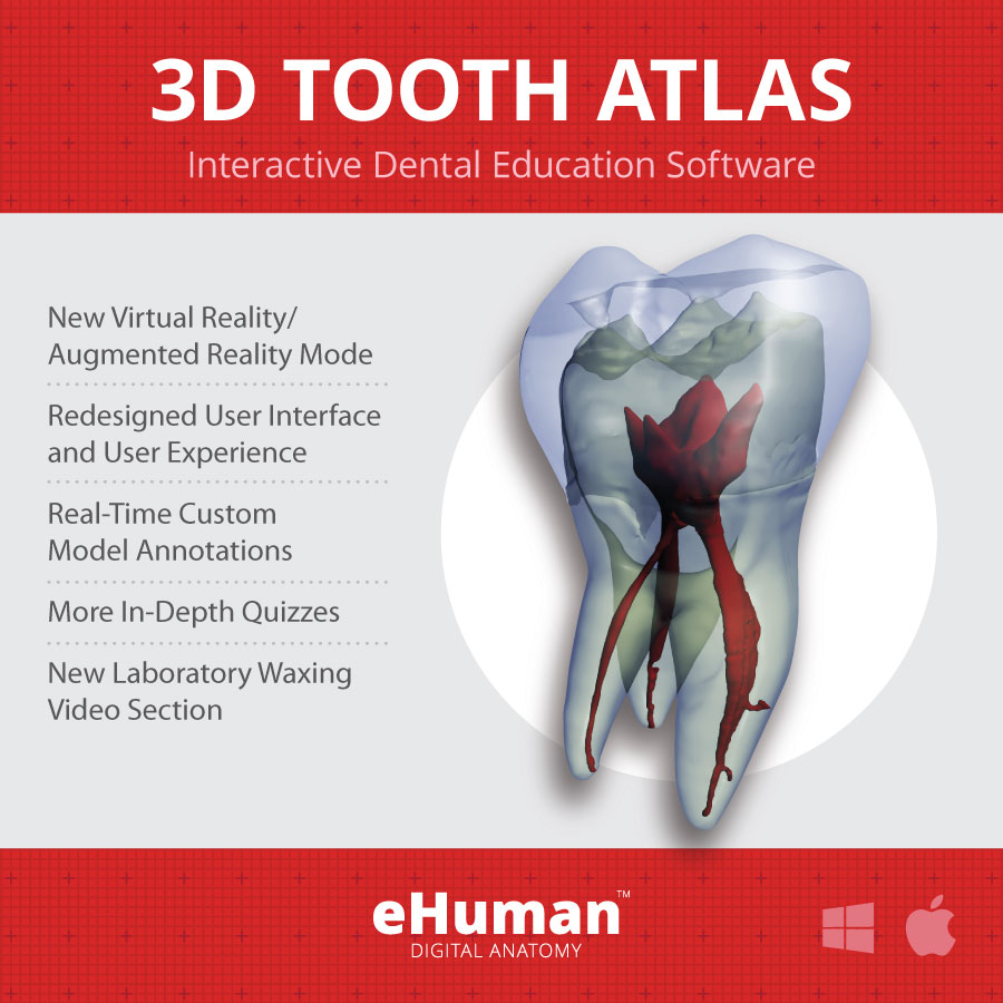 3D Tooth Atlas 9 Online Subscription | eHuman
