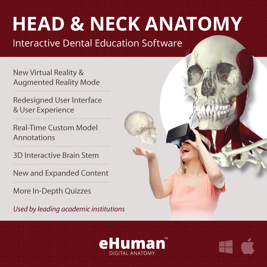 Head & Neck Anatomy 3