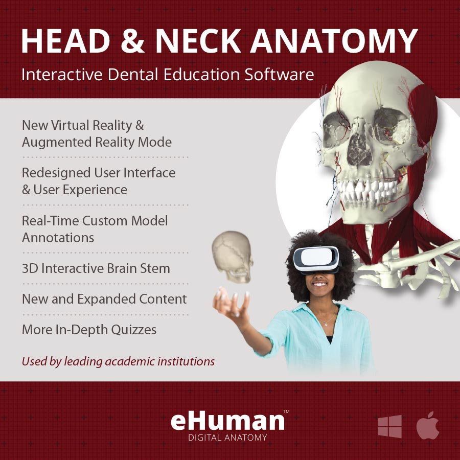 Head and Neck Anatomy